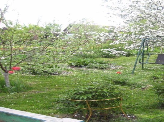Продам дом с участком по адресу Россия, Кемеровская область, Промышленновский, Березово, Нагорная фото 1 по выгодной цене